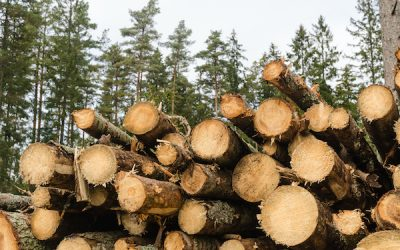 How is Sustainable Timber Produced?